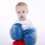 Photo of cute little boxer on white Stock Photo