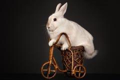 Сute rabbit riding bike Royalty Free Stock Photos