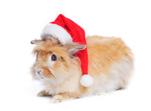 Photo of cute rabbit in a santa hat. Stock Photos