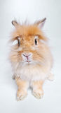 Photo of cute rabbit. In studio Stock Image