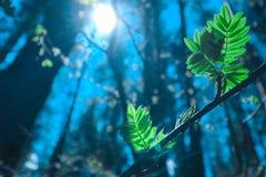 Photo dépeignant une macro vue de ressort du brunch d'arbre avec de la graisse Photographie stock libre de droits