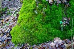 Photo dépeignant une mousse vert clair sur une vieille pierre Image libre de droits