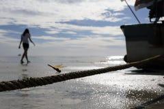 Photo d'Abstact de libellule brune sur la corde Image stock