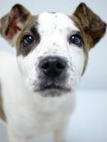Photo d'adoption de chiot Photographie stock libre de droits