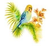 Photo d'aquarelle de perruche sur le fond blanc Image libre de droits