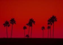 Photo d'art des palmiers en silhouette contre le ciel rouge images stock