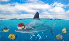 Photo d'eau du fond de moitié du paradis tropical avec un groupe des poissons et du grand requin avec le chapeau de Santa Claus illustration stock