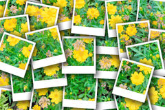 Photo d'instant de Comos Images libres de droits