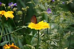 Photo d'un jardin d'été Photos libres de droits