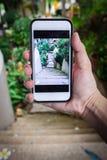 Photo d'un mini jardin dans mon arrière-cour Photo stock