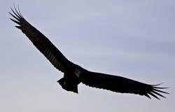photo d'un vautour dans le ciel Photos libres de droits