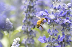 Photo d'une belle abeille et des fleurs par jour ensoleillé Photo libre de droits