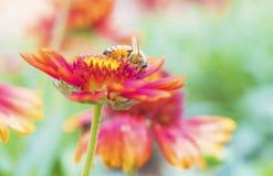 Photo d'une belle abeille et des fleurs par jour ensoleillé Photo stock