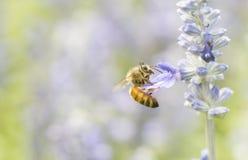 Photo d'une belle abeille et des fleurs par jour ensoleillé Images stock