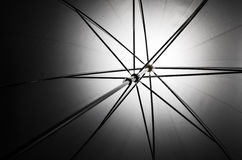 Photo d'une pousse par le parapluie Photographie stock