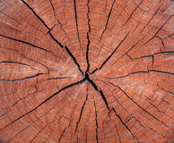 Photo d'une texture brune d'une section transversale d'arbre Photos stock