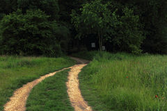 Photo of dark path to haunted forest, photo manipulated for more Royalty Free Stock Photo