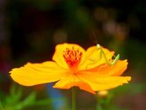 Photo de beau-fleur images stock