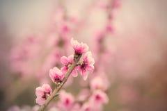 Photo de bel arbre de floraison avec le petit flowe rose merveilleux Photos stock