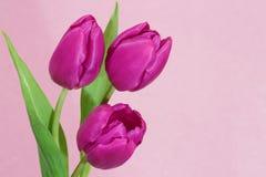 Photo de carte de jour de Valentines ou de mères Photo stock