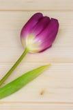 Photo de carte de jour de Valentines ou de mères Photos libres de droits