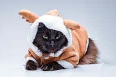 Photo de chat noir dans le costume de cerfs communs Photos stock