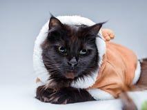 Photo de chat noir dans le costume de cerfs communs Photo stock