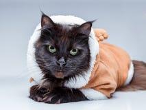 Photo de chat noir dans le costume de cerfs communs Photographie stock libre de droits