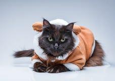 Photo de chat noir dans le costume de cerfs communs Images libres de droits