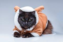 Photo de chat noir dans le costume de cerfs communs Photos libres de droits