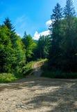 Photo de chemin de terre dans la forêt en montagnes carpathiennes Images stock