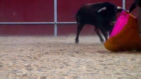 Photo de combat de taureau d'Espagne. taureau noir banque de vidéos