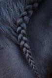 Photo de crinière de cheval avec le tresse photos stock