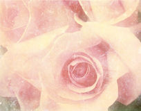 Photo de cru des roses image stock