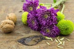 Photo de deux chrysanthèmes de noix, verts et pourpres sur en bois merci Image stock