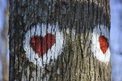 Photo de deux coeurs rouges peints sur l'arbre Images libres de droits