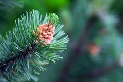 Photo de feuille impeccable verte dans la forêt image libre de droits