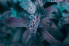 Photo de feuilles en bon état Images stock