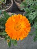 Photo de fleur Photos stock