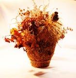 Photo de flowe sec d'automne images stock