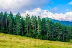 Photo de forêt verte et vallée en montagnes carpathiennes Photos stock