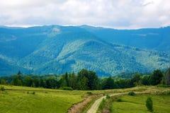 Photo de forêt verte et vallée en montagnes carpathiennes Images stock