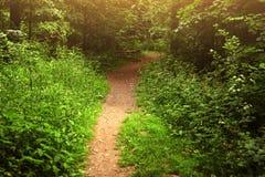 Photo de jour ensoleillé d'été de chemin forestier Image stock