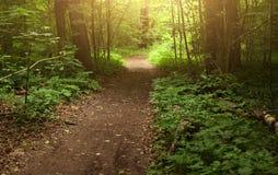 Photo de jour ensoleillé d'été de chemin forestier Photographie stock libre de droits