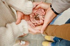 Photo de la famille de mains du cône de sapin quatre se tenant photographie stock libre de droits