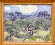 Photo de la peinture originale célèbre par Vincent Van Gogh : Oliviers de ` dans un ` montagneux de paysage photographie stock libre de droits
