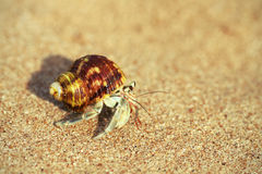 Photo de macro de bernard l'ermite Image stock