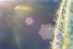Photo de macro de flocon de neige images libres de droits
