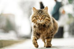 Photo de marcher le chat sans abri de gingembre malheureux photos libres de droits