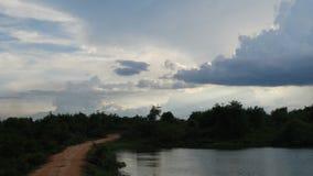 Photo de mon safari de faune Photos libres de droits